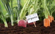 Applicating Baicao Products on Organic Vegetables